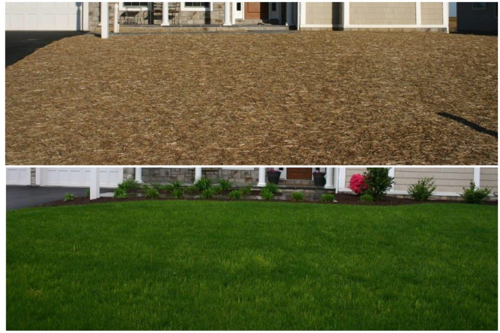Seeded lawn before and after