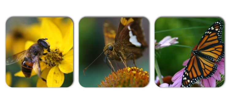 Pollinator Collage-large